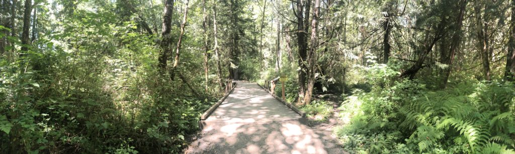 Beautiful trail running right in the middle of Gig Harbor!  Check out a class at Sehmel Homestead Park!